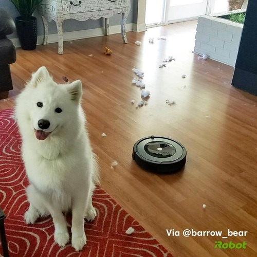 dog with roomba