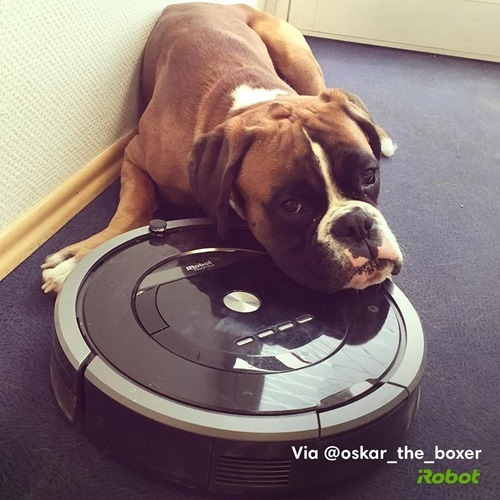 dog laying on roomba